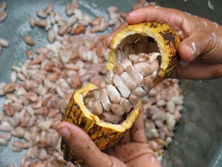 Soirée Chocolat im Chocoversum  – Eine Reise durch die Geschichte der Schokolade