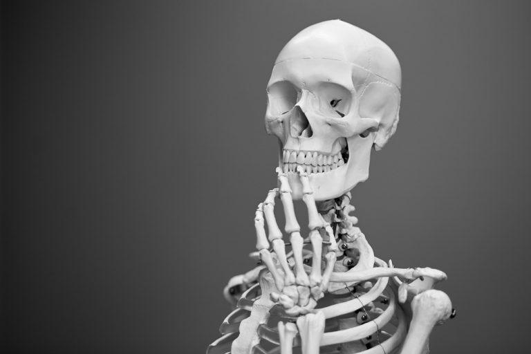 Anatomiebilder – der künstlerische Blickfang